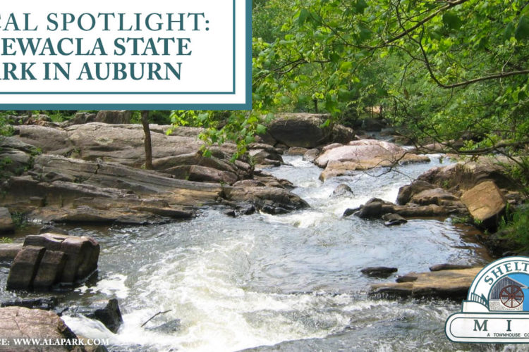 Local Spotlight: Chewacla State Park in Auburn